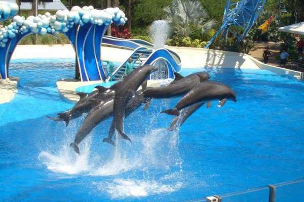 // Dolphin Show From Lara