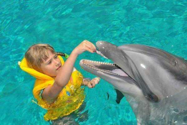 // Dolphin Swim  Lara