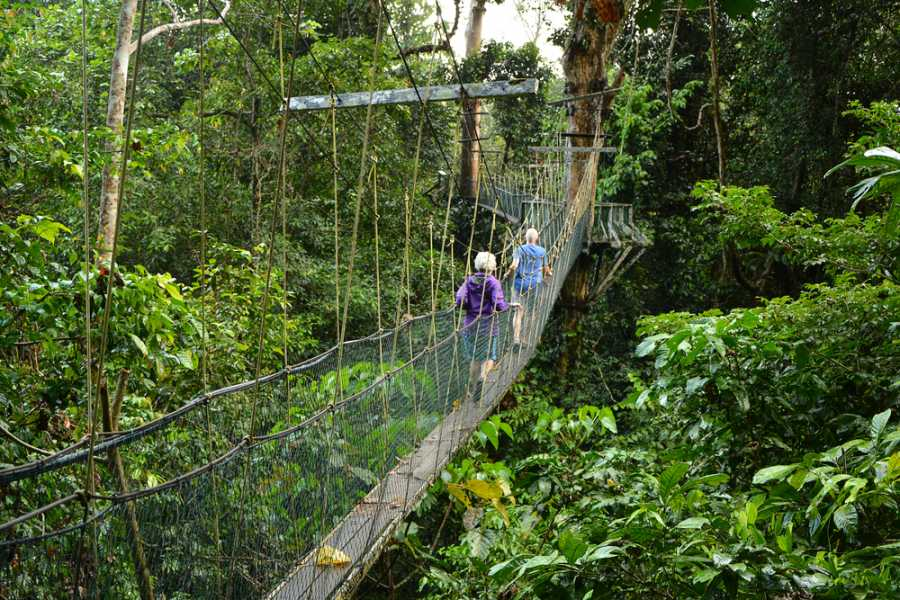 Tour Guanacaste On-Line Arenal Hanging Bridges Combo