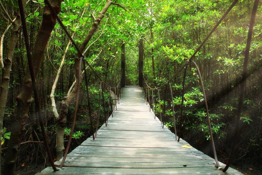 Tour Guanacaste Arenal Hanging Bridges and Zorbing Combo
