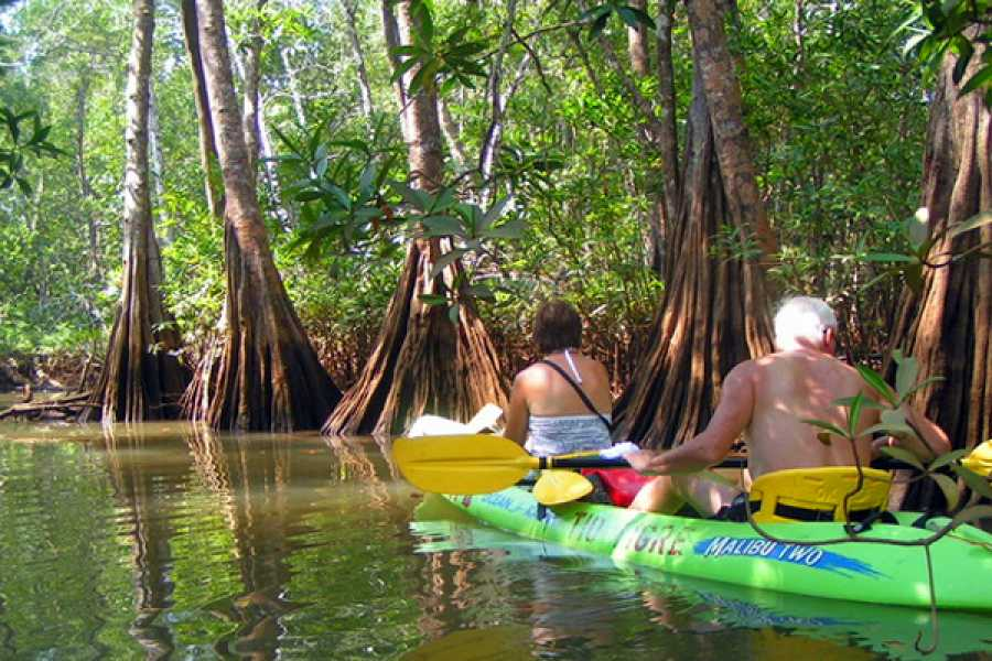 Tour Guanacaste Tamarindo Estuary Kayaking Tour