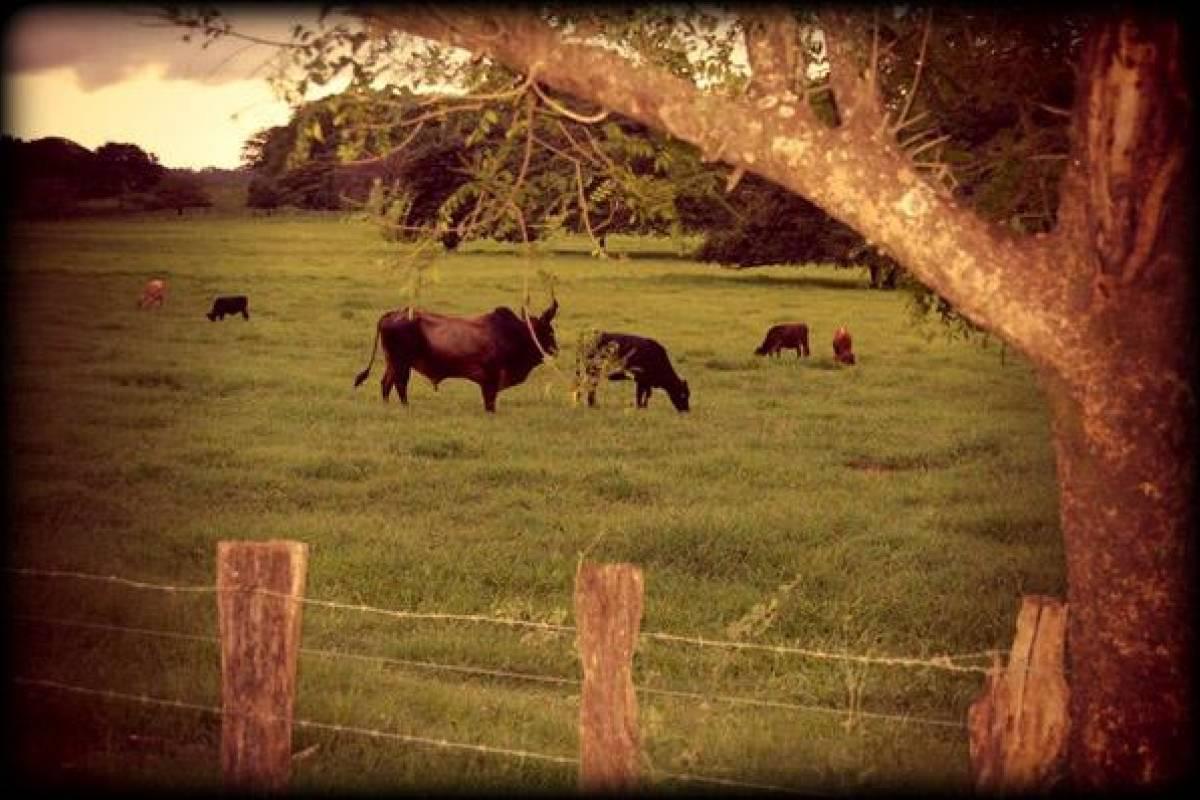 Black stallion ranch BBQ Fiesta