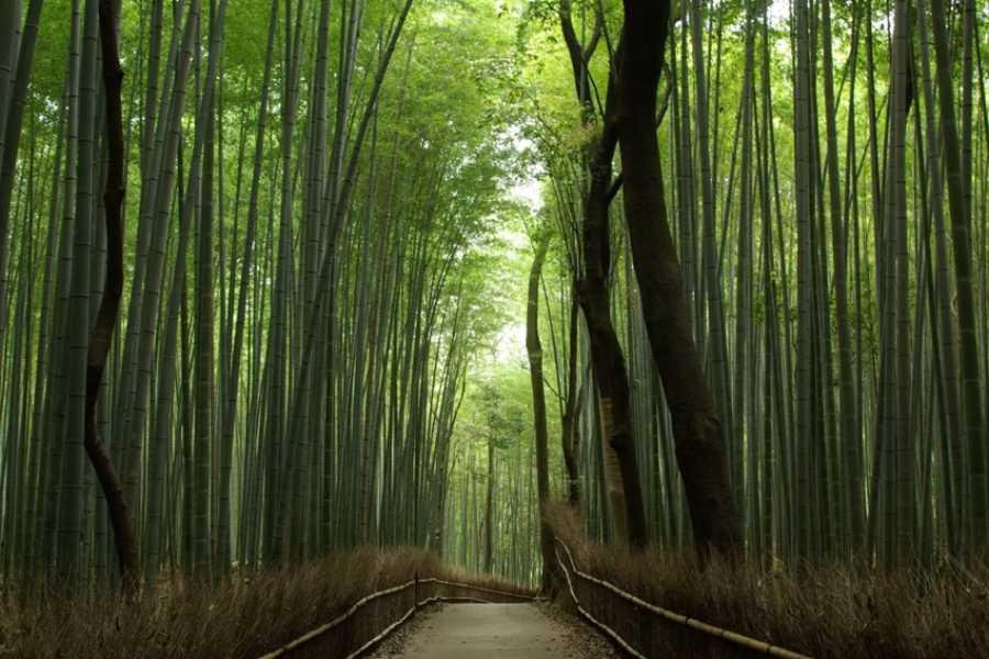 Mina Japan Kyoto West Zone