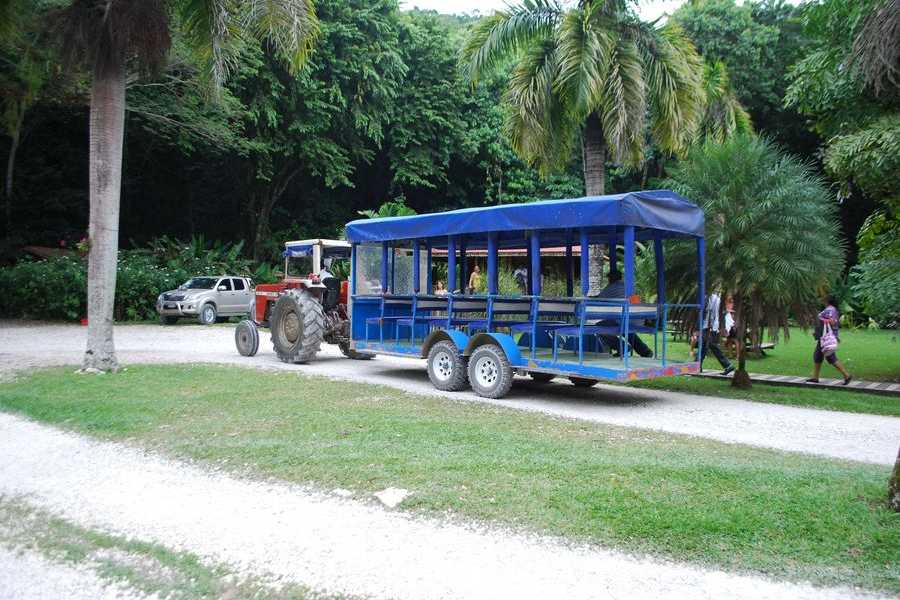 Walkbout International LLC Safari and Wildlife - Jamaica: Walkbout Black River Safari & YS Falls Experience