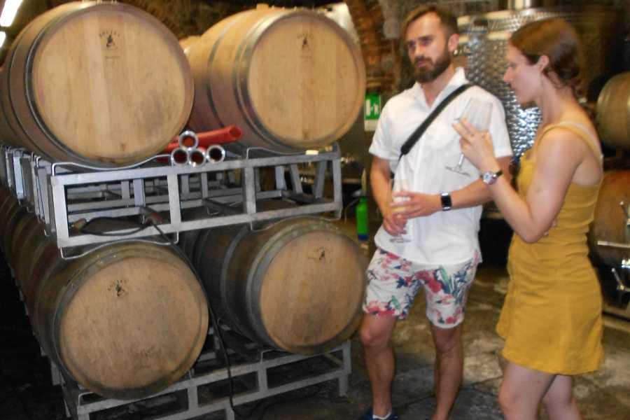Tuscanmagic Di Dng srl Fd  Chianti  Wine Tour, among Vineyards,small Borghi, and Castles