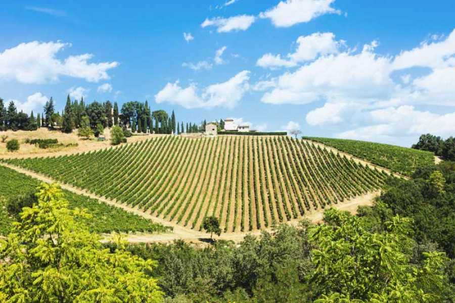 Tuscanmagic Di Dng srl Fd  Chianti  Wine Tour, among Vineyards,small Borghi, and Castles