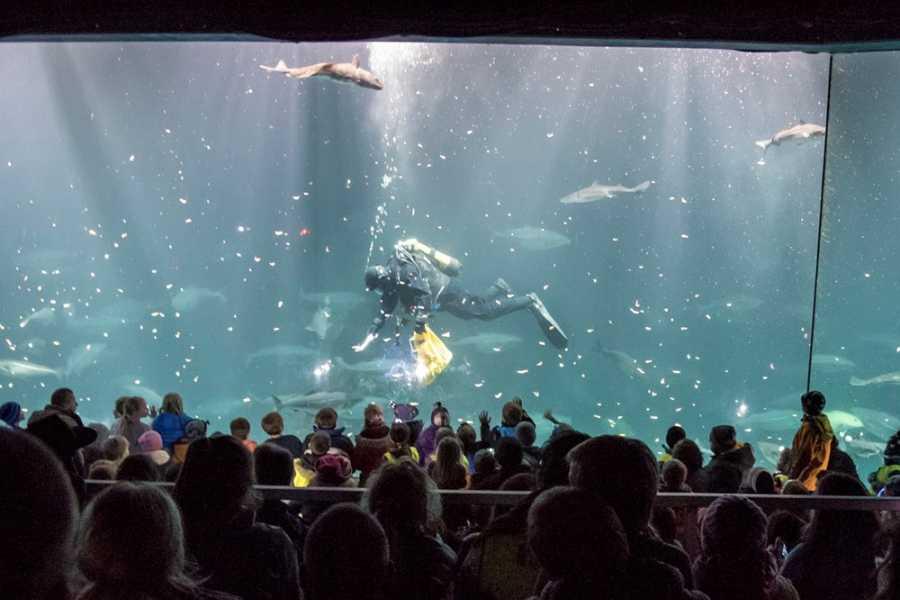 LocalTrips AS 03. Aquarium and ViewPoint Aksla