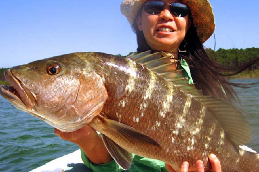 Eleuthera Adventure Tours Ltd. Deep Sea Fishing or Reef Fishing