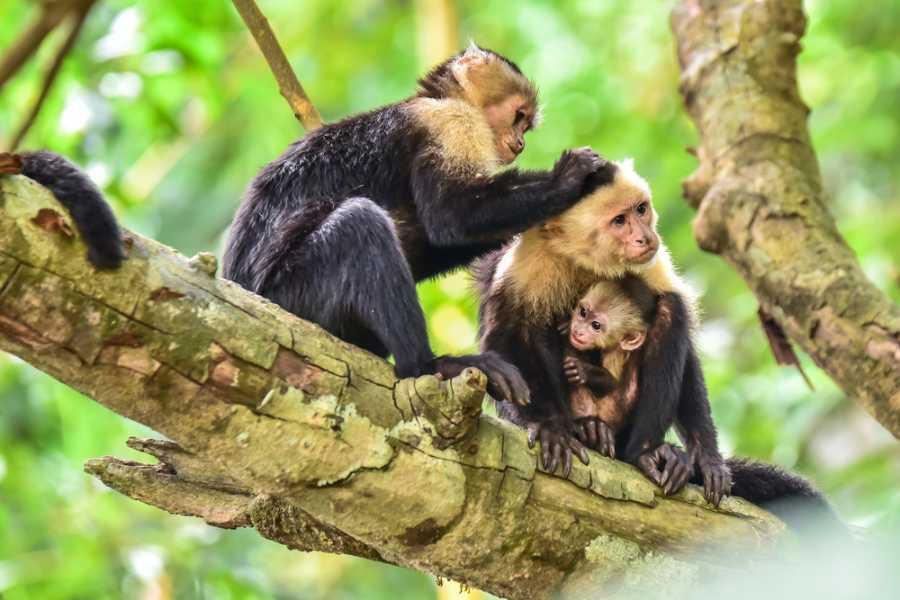 CongoCanopy.com ATV + Monkey Sanctuary Combo