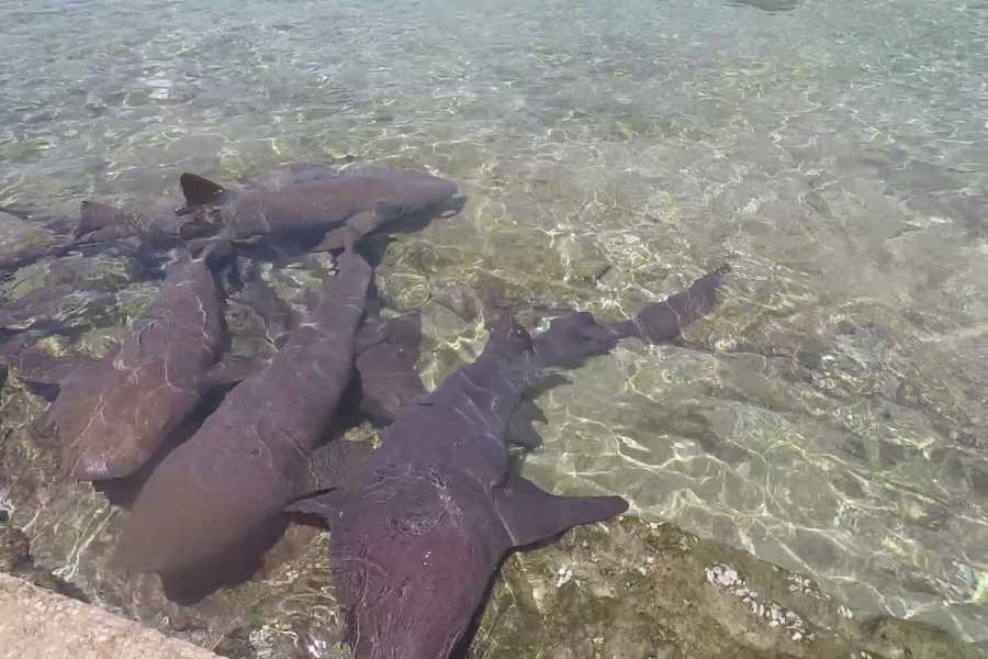 Eleuthera Adventure Tours Ltd. Swim with the Pigs- 4 Island Epic Exuma Adventure