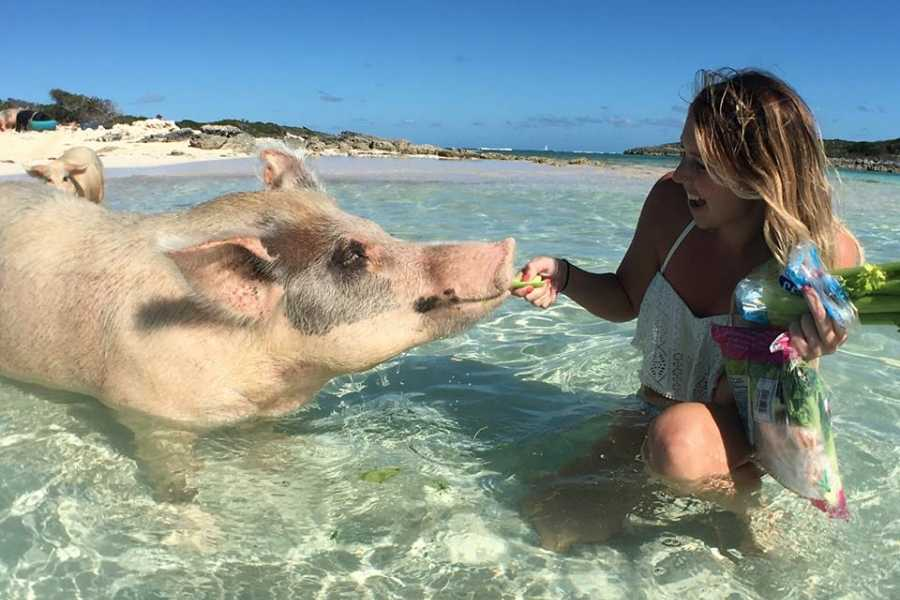 Eleuthera Adventure Tours Ltd. Swim with the Pigs/ Thunderball Grotto