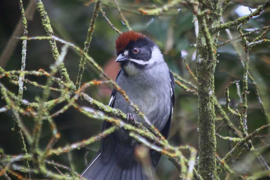 Andes Ecotours Chicaque Reserve Birding & Photography