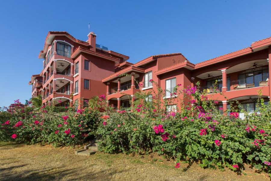 Tour Guanacaste On-Line Bougainvillea 8103