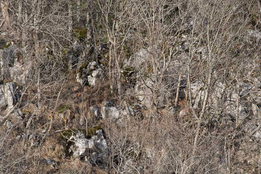 Wildlife Adventures Storie di lupi e pastori