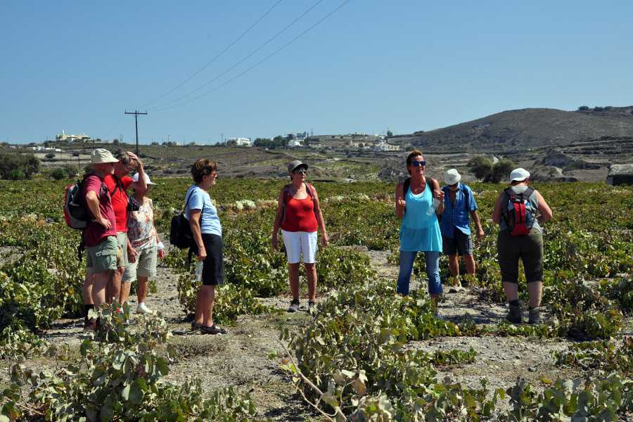 Grekaddict Santorini Wine Tour