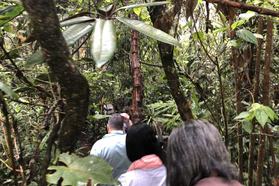Medellin City Tours Amazing Arvi Naural Reserve