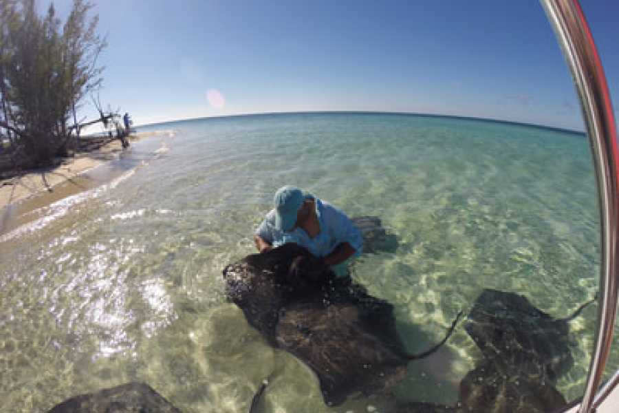 TheRealBahamas LLC Grand Bahama - Half Day Stingray Experience Tour: West End Ecology Tour