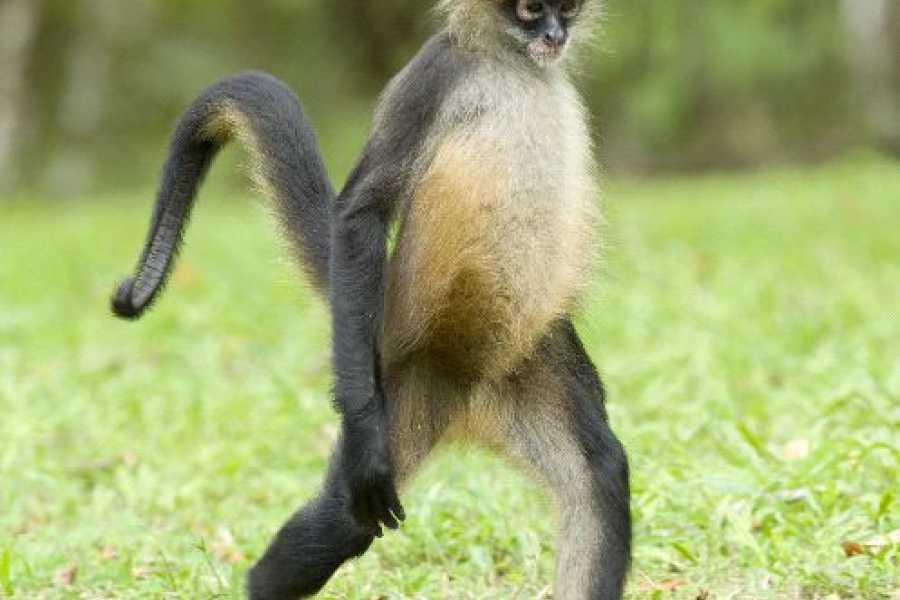 Krain Concierges Canopy Zip Line and Monkey Sanctuary
