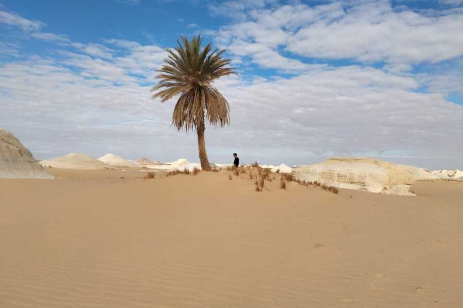 Marsa alam tours 2  Day trip to the white desert tour from cairo