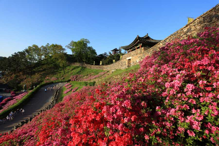 HanaTour ITC Western Korea 4days [Discover Korea] (Saturday departure)