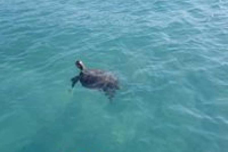 Eleuthera Adventure Tours Ltd. Time for Da Turtle Tour