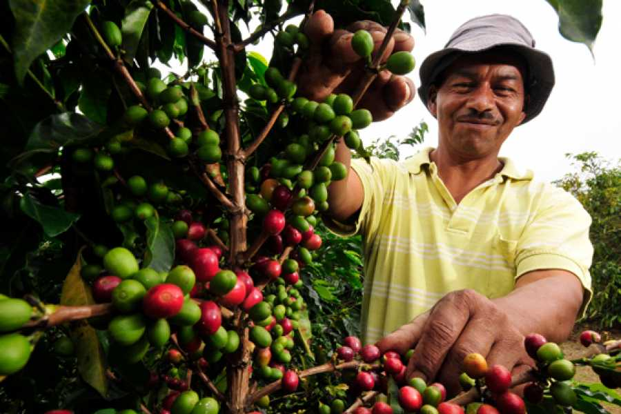 Medellin City Services Coffee Plantation and Jardin City Day-Tour