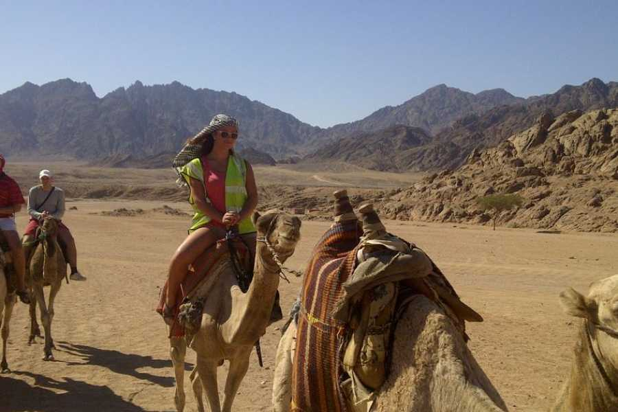 Excursies Egypte Morning Quad Safari from Hurghada