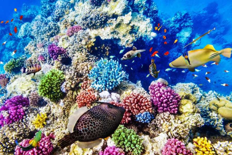 Excursies Egypte Semi Submarine trip from Hurghada