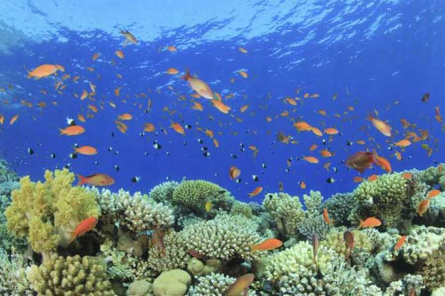 Excursies Egypte Snorkeling Trip At Port Ghalib Marina from Marsa Alam