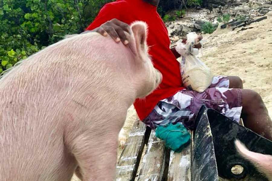 TheRealBahamas LLC Da Farm: Half Day: Bonafide Bonefishing