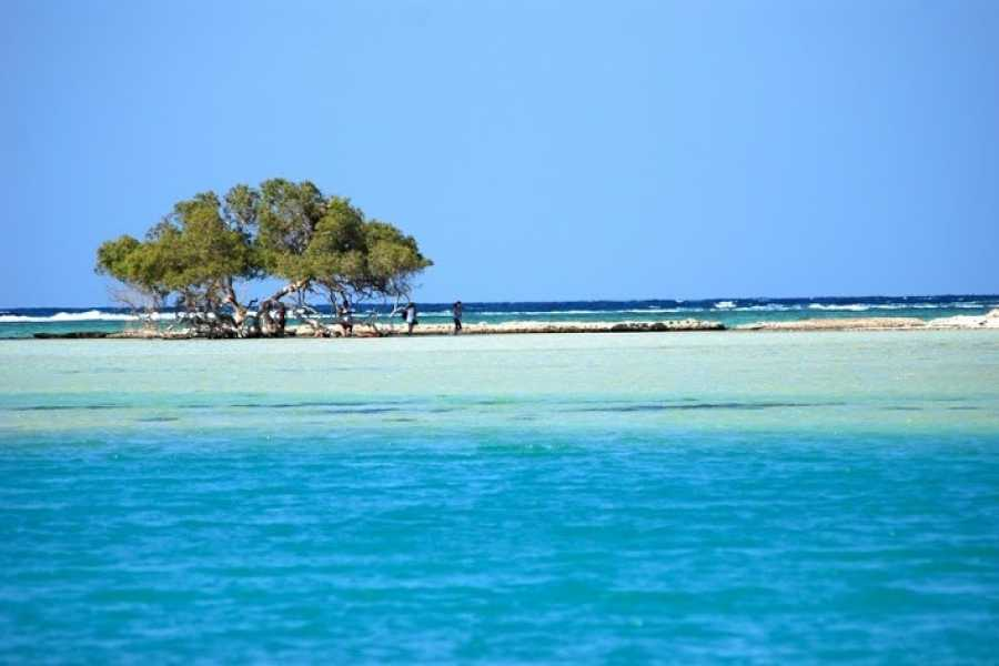 Excursies Egypte Private tour to Sharm El Luli and wadi el Qulaan Tours from Marsa alam