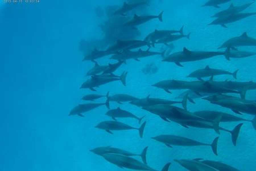 Marsa alam tours Private Snorkeling Boat Trip to Satayah dolphin house