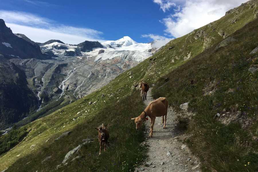 Saas-Fee Guides Der Sommer gehört der Jugend
