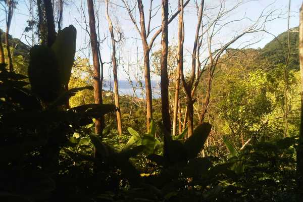 1st Segment, Waitukubuli National Trail