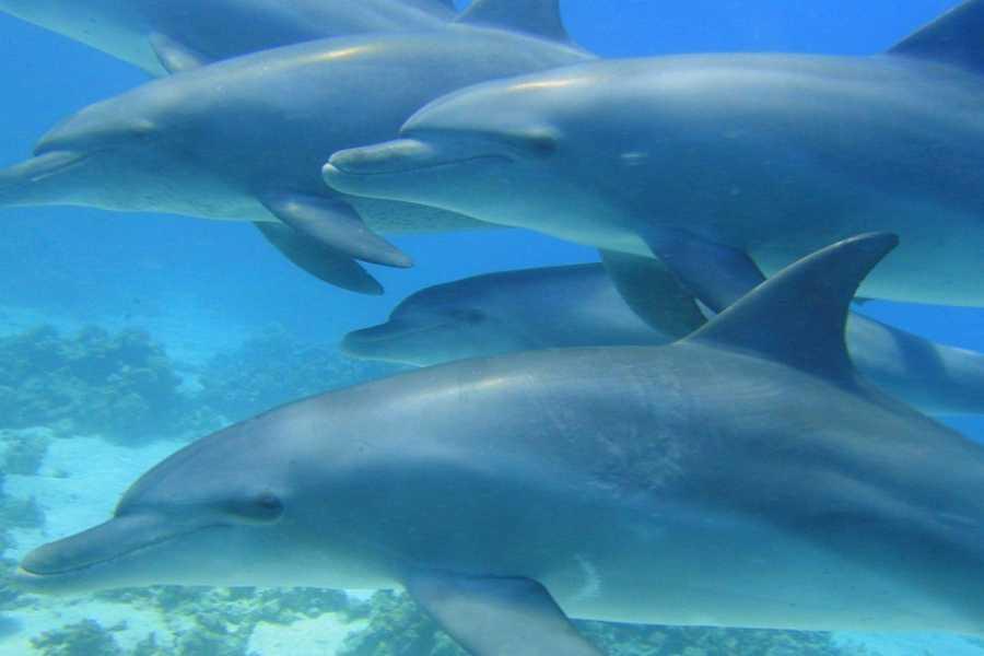 Excursies Egypte Dolfijn house dag snorkeling excursie vanuit Makadi