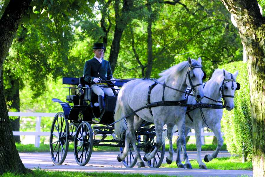 ToDoInSlovenia, brand of Kompas d.d. UNESCO HERITAGE AND LIPIZZAN HORSES