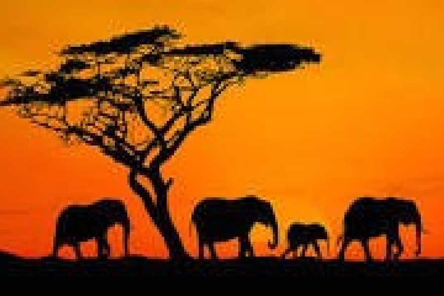 Walkbout International LLC Safari and Wildlife - Kenya - Samburu National Reserve etc. 8 Days