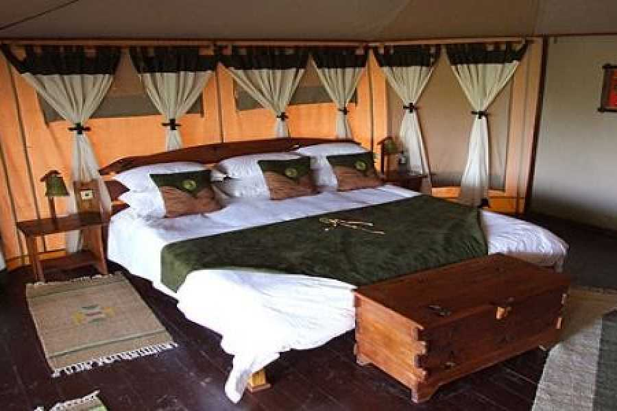 Walkbout International LLC Safari and Wildlife - Kenya:  Jungle Explore Safari - 6 Days