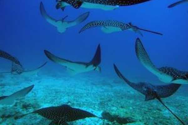 1 Day Scuba Diving - Galapagos