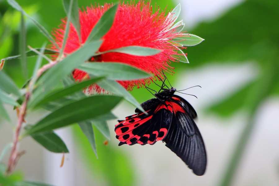 Cervia Turismo Maison des Papillons + Navette