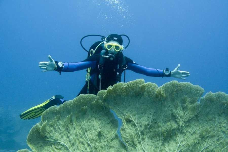 Excursies Egypte Intro diving trip  from Makadi