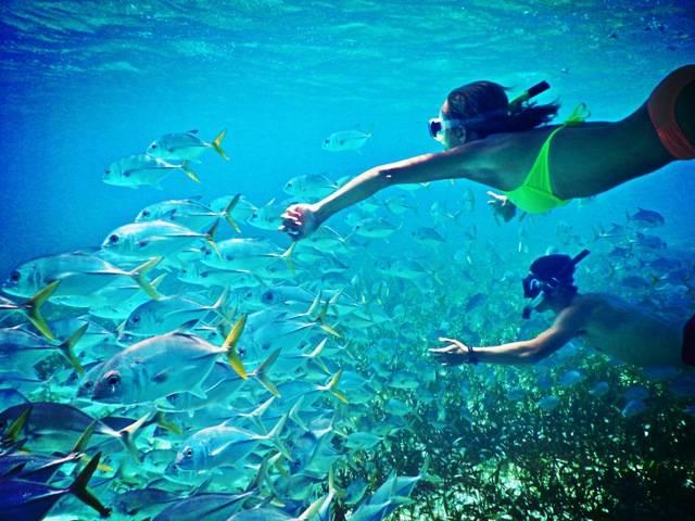 Snorkelling Coin de Mire Island