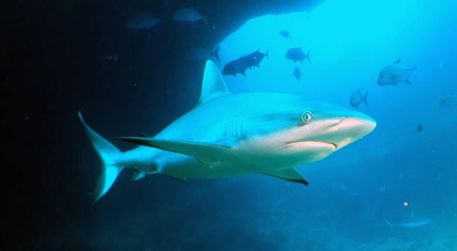 Round Island Shark Dive, Round Island Shark Dive, Round Island Shark Dive