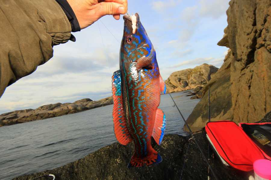 Magma Geopark Fishing tour with a local