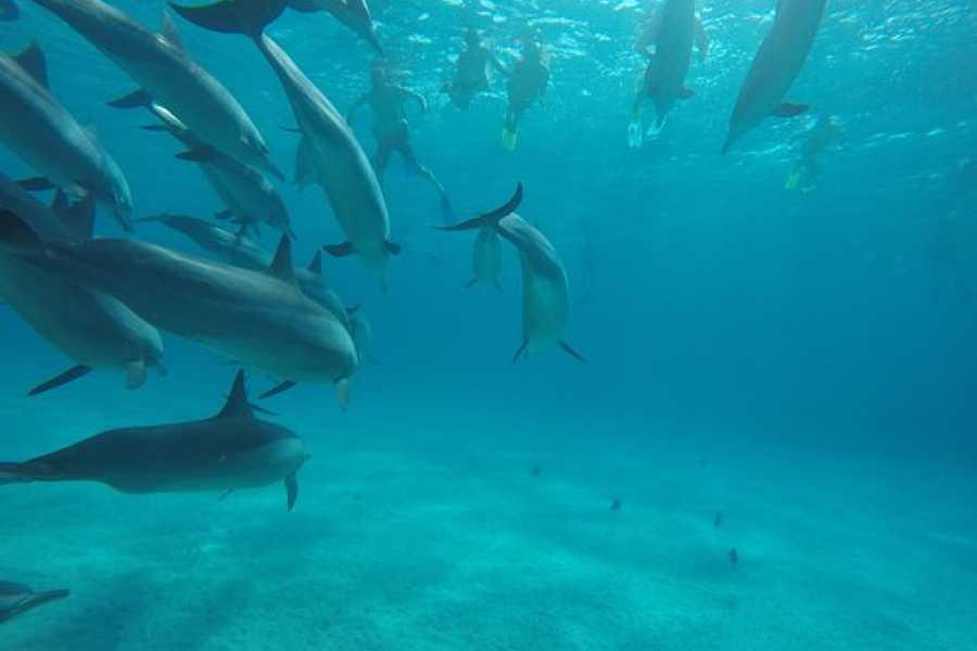 Excursies Egypte Prive boot excursie naar dolfijn huis  Sataya in Marsa alam