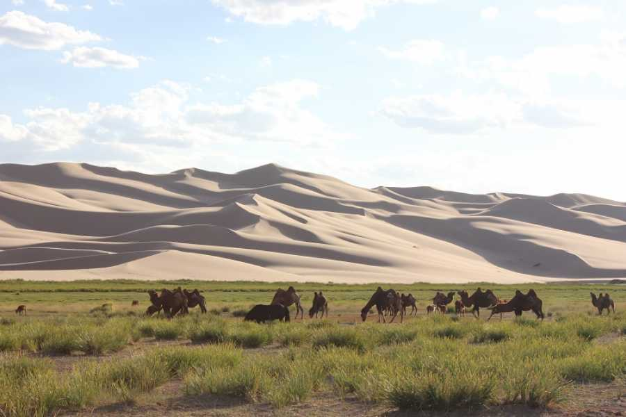 The Great Mongolian Adventures Highlights of Mongolia 12 Days