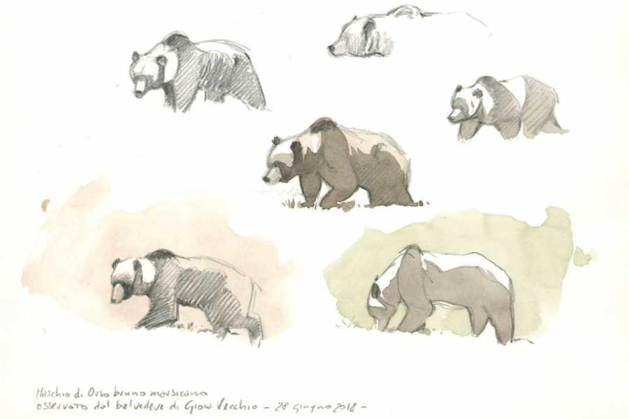 Wildlife Adventures Corso disegno e acquerello dal vero