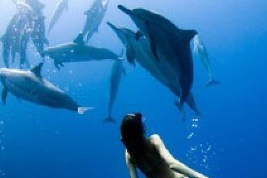 Walkbout International LLC Safari and Wildlife - Tanzania: Dolphin Tour - Half Day