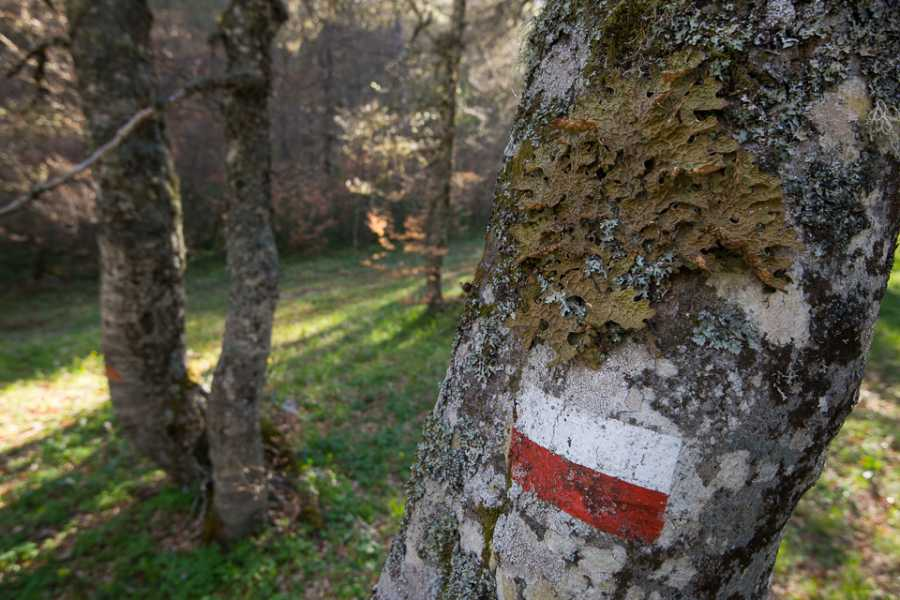 Wildlife Adventures Terraegna valley and the ancient forest UNESCO heritage