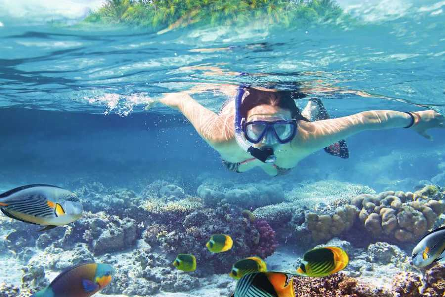 Excursies Egypte Tiran Island Snorkeling Trip from Sharm el Sheikh